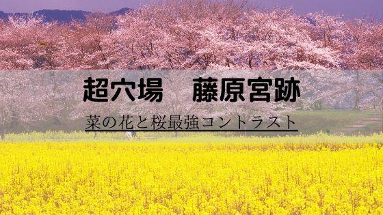 関西 菜の花 畑 菜の花畑の名所や人気スポット、関東〜関西〜中部〜九州│旅と観光の手帳