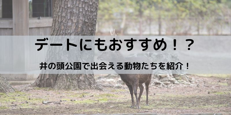 井の頭公園 動物