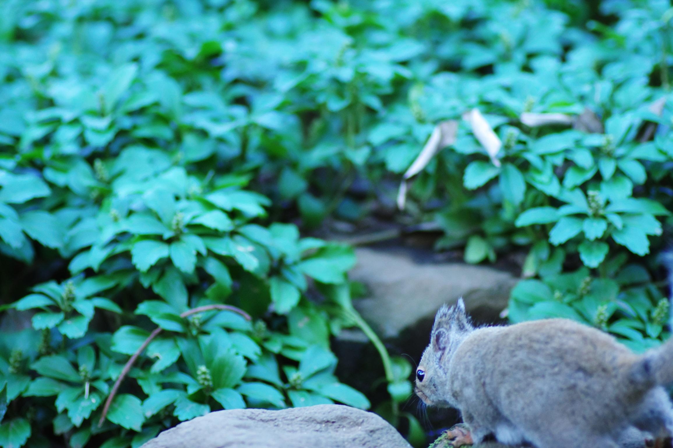 井の頭公園の動物 リス