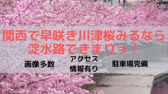関西の早咲き桜情報