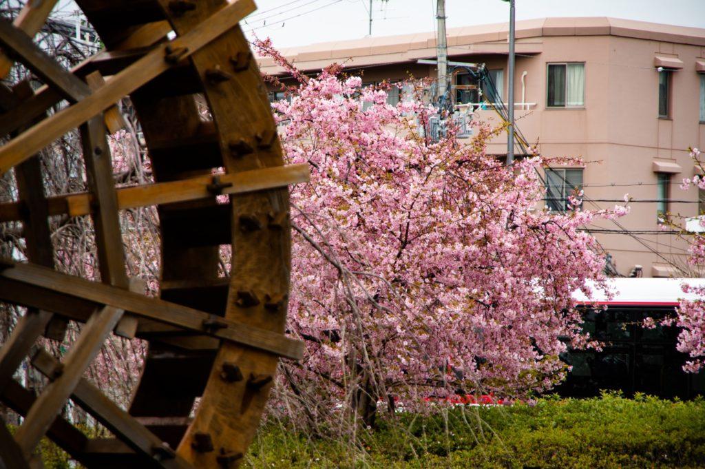 風車と川津桜