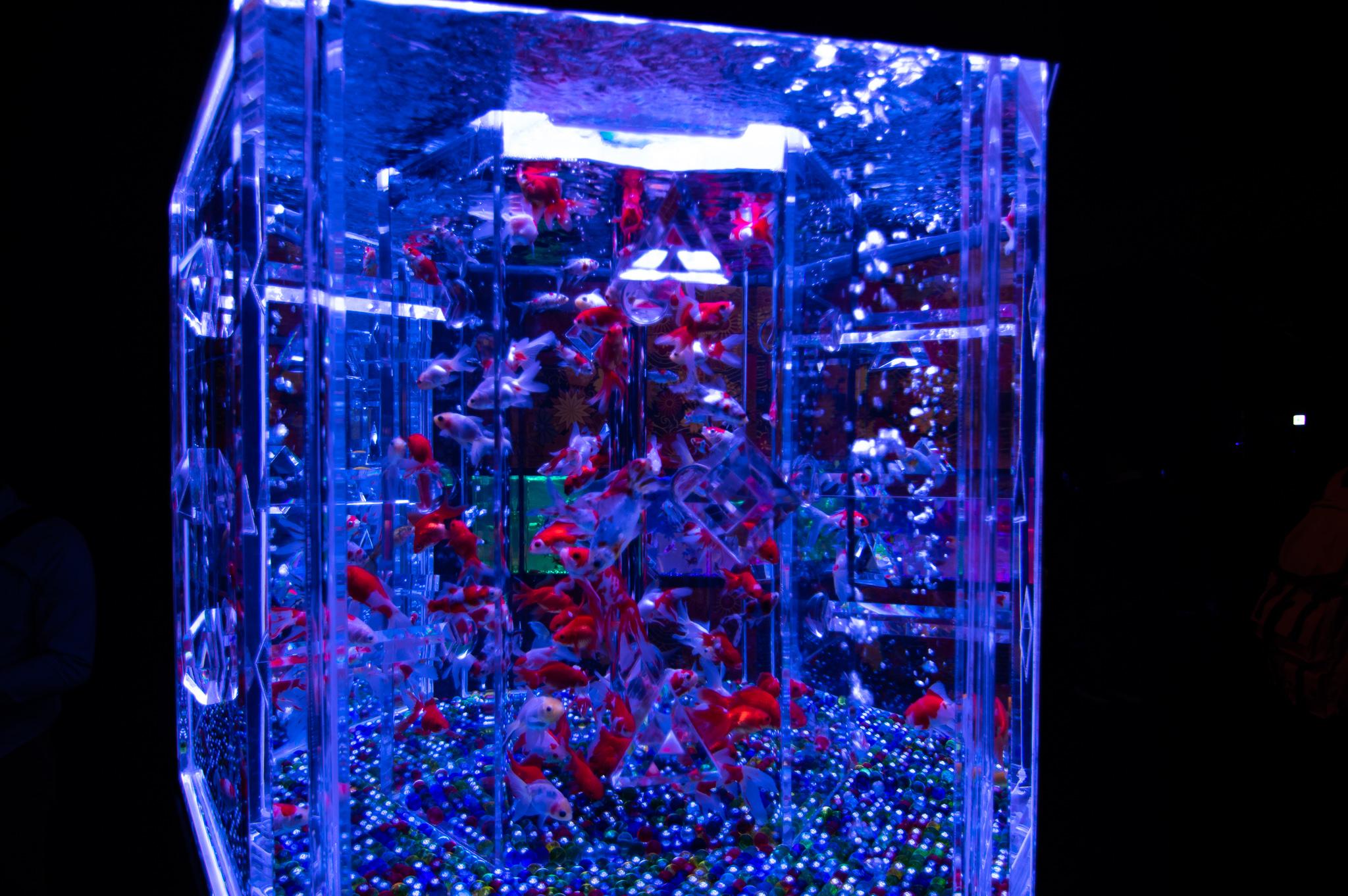 アートアクアリウム幻想的な水槽