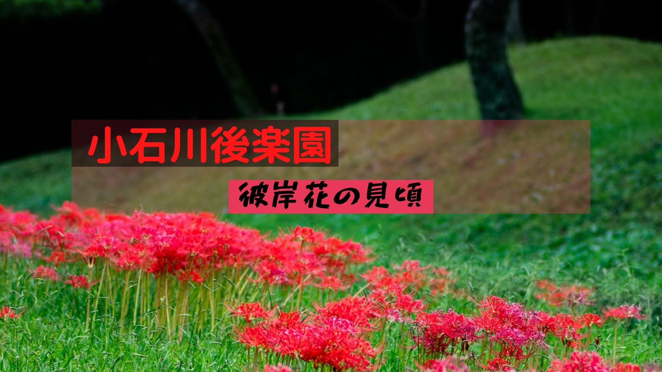 小石川後楽園の彼岸花の見頃情報